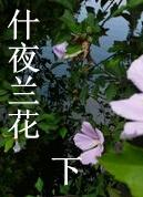 什夜兰花(下)
