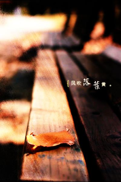 风吹落叶黄